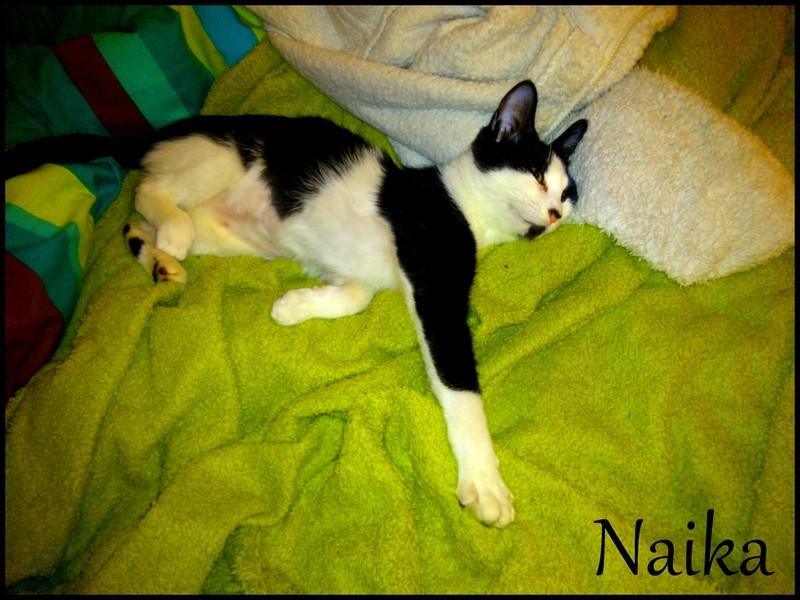NAIKA  - Page 3 Dsc_0135