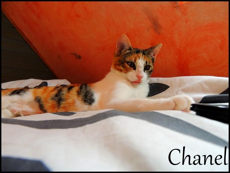 CHANEL (Violette)  - Page 2 Dscn8614