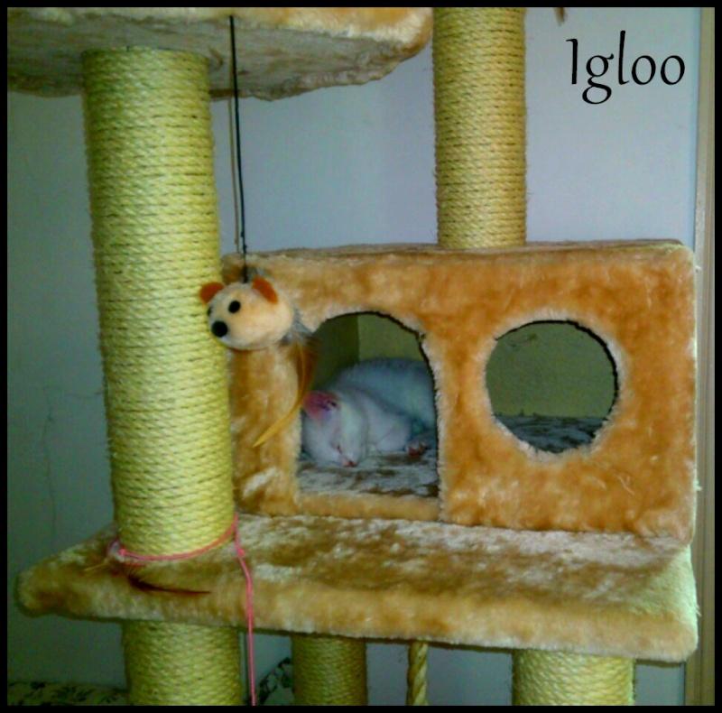 IGLOO Img_2012