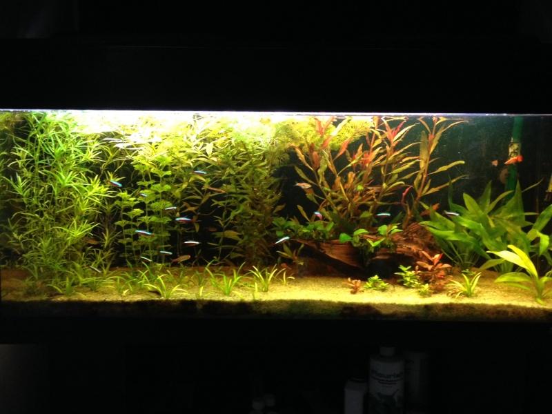 240L orienté amazonien Photo110