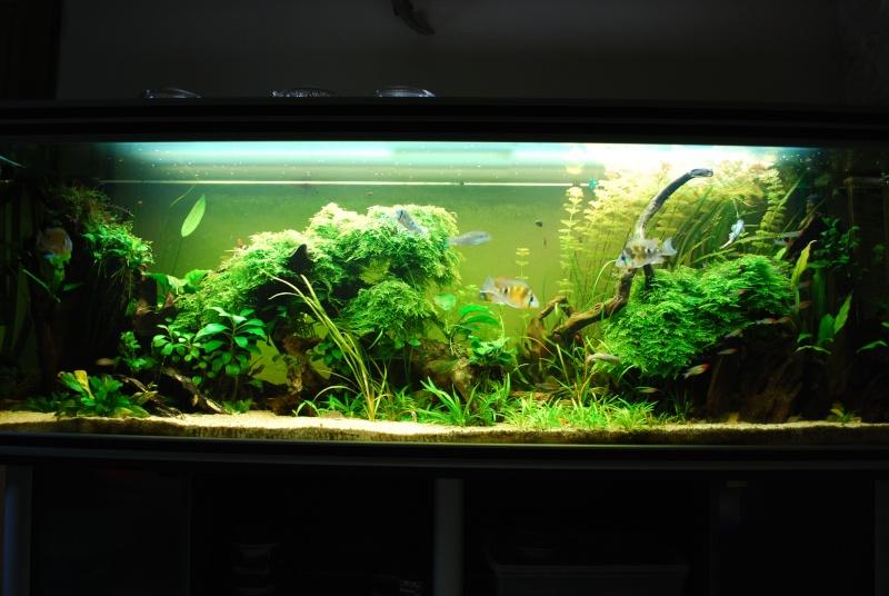 On ne s'ennuis pas en aquariophilie/ aquarium 830 litres  - Page 3 Dsc_0610
