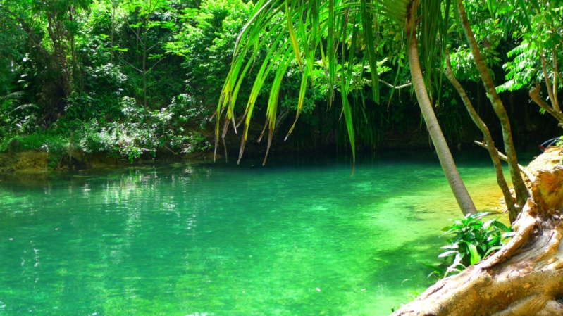 The Hinatuan River, une rivière enchantée aux Philippines 1143