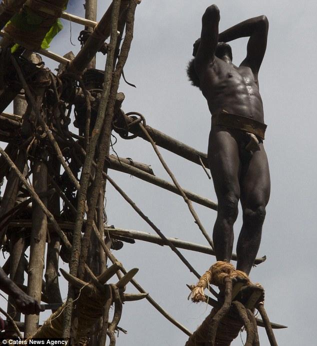 l'incroyable rituel de passage dans cette tribu du Pacifique 1271
