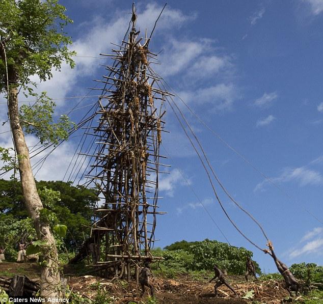 l'incroyable rituel de passage dans cette tribu du Pacifique 1274