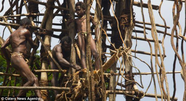 l'incroyable rituel de passage dans cette tribu du Pacifique 1276