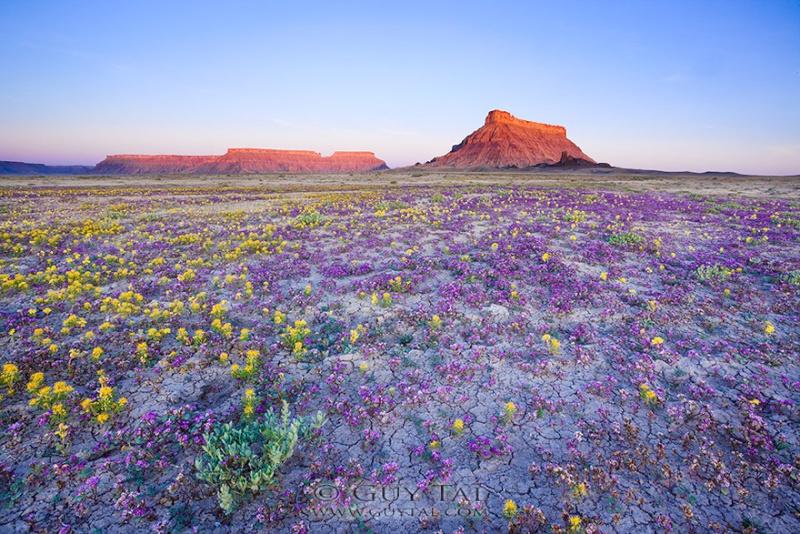 Quand les déserts de l'Utah fleurissent, 261