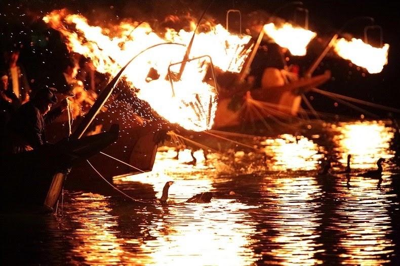 Le Ukai, l'art ancestral japonais de la pêche au cormoran 287