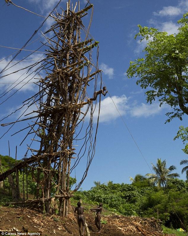 l'incroyable rituel de passage dans cette tribu du Pacifique 297