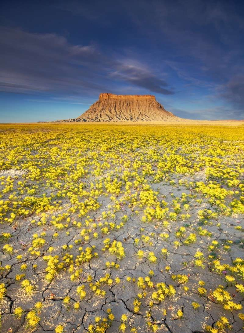 Quand les déserts de l'Utah fleurissent, 341