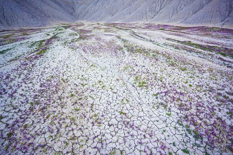 Quand les déserts de l'Utah fleurissent, 343