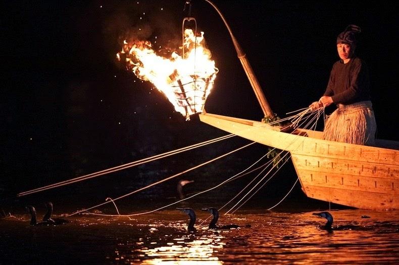 Le Ukai, l'art ancestral japonais de la pêche au cormoran 356