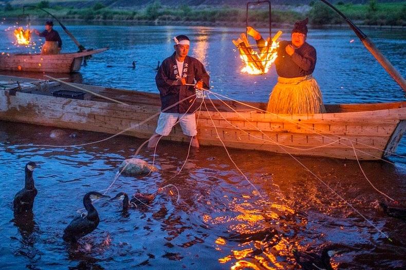 Le Ukai, l'art ancestral japonais de la pêche au cormoran 357