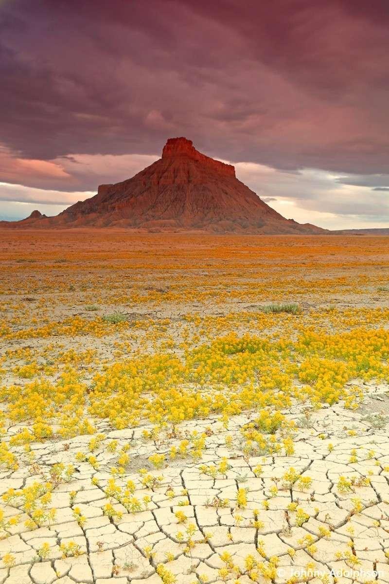 Quand les déserts de l'Utah fleurissent, 518