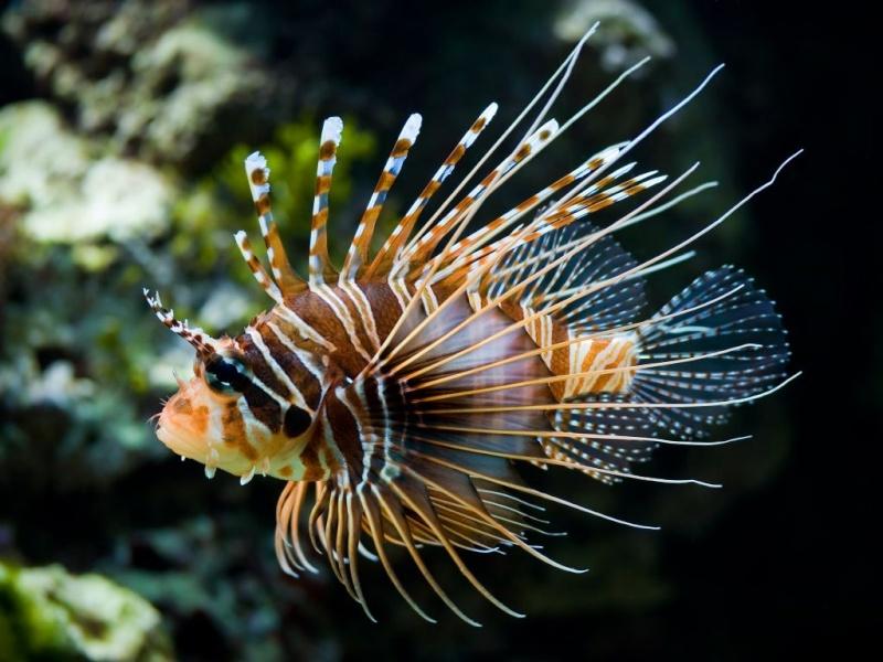 poissons eua de mer 4ac1c410