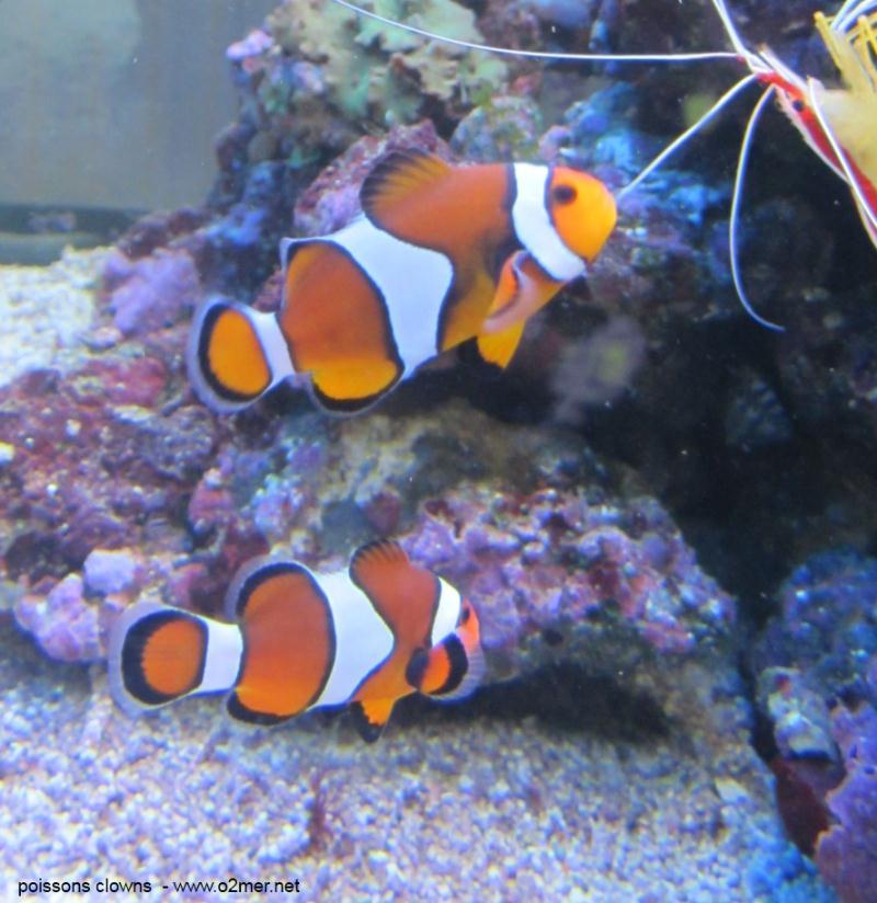 poissons eua de mer Poisso11