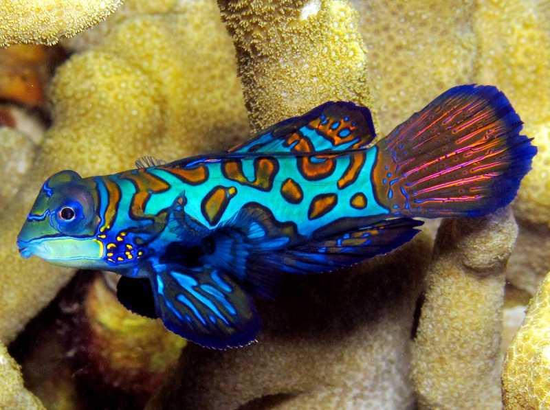 poissons eua de mer Pteros10