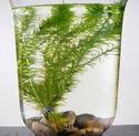 plantes aquarium Plante10