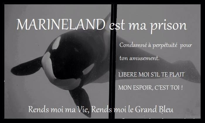 Anti-Marineland 10622810