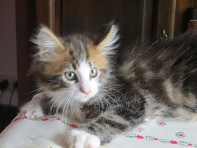 mon nouveau chat 25_mai15