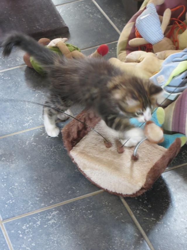 mon nouveau chat 25_mai16