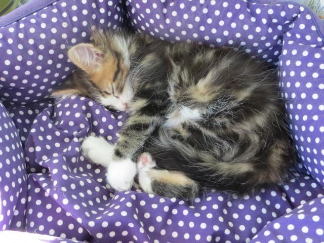 mon nouveau chat 30_mai10