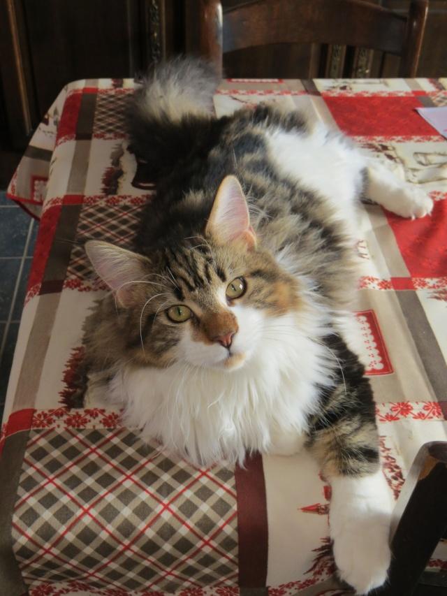 mon nouveau chat Janvie10