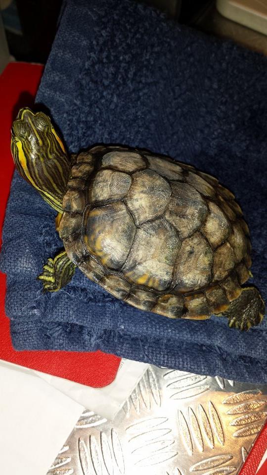 Ma tortue est elle malade??? 10608810