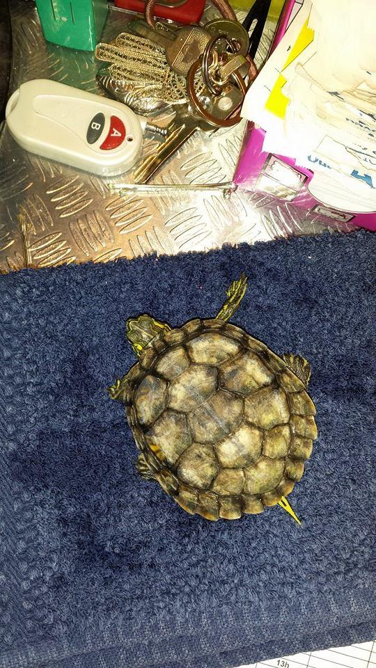 Ma tortue est elle malade??? 10609310