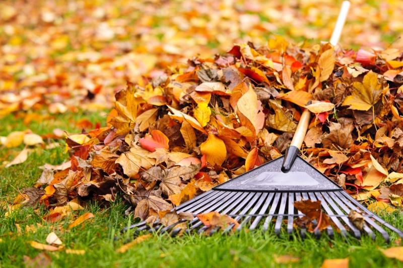 Option de date de nettoyage d'automne 89934710