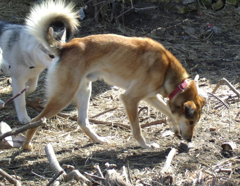 Audie the Wonderdog Gedc0510