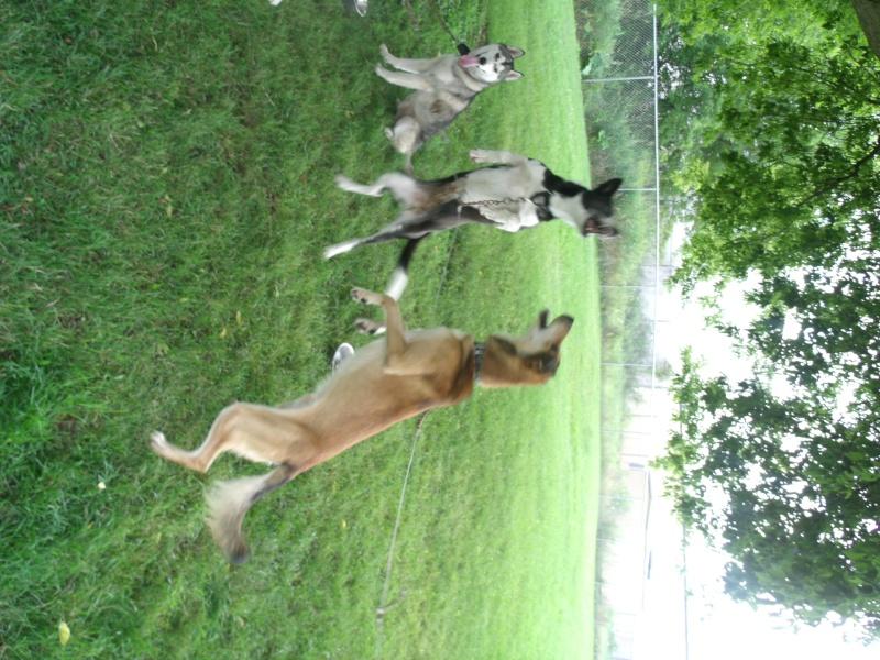 Audie the Wonderdog Gedc1611