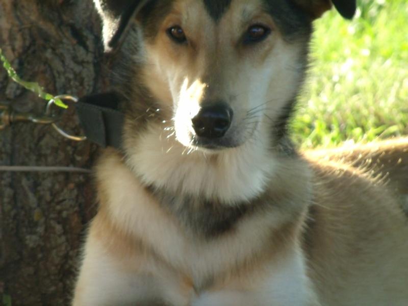 Audie the Wonderdog Gedc2410