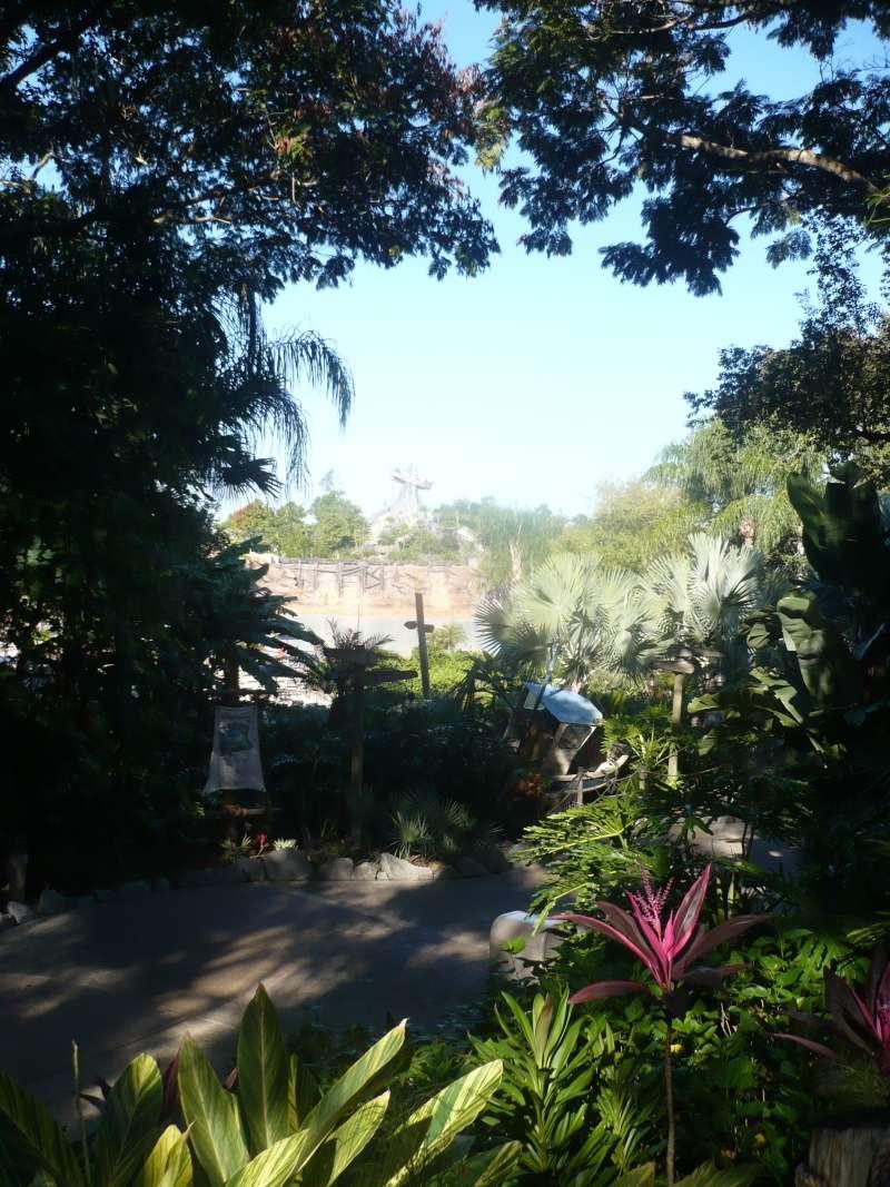 [18-31 octobre 2014] Voyage de noces à Walt Disney World et à Universal - Page 4 P1080816
