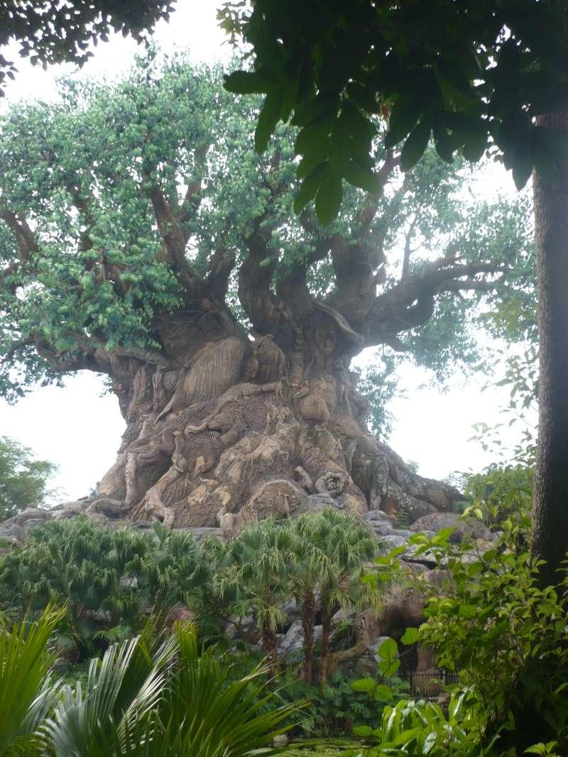 [18-31 octobre 2014] Voyage de noces à Walt Disney World et à Universal - Page 5 P1080937