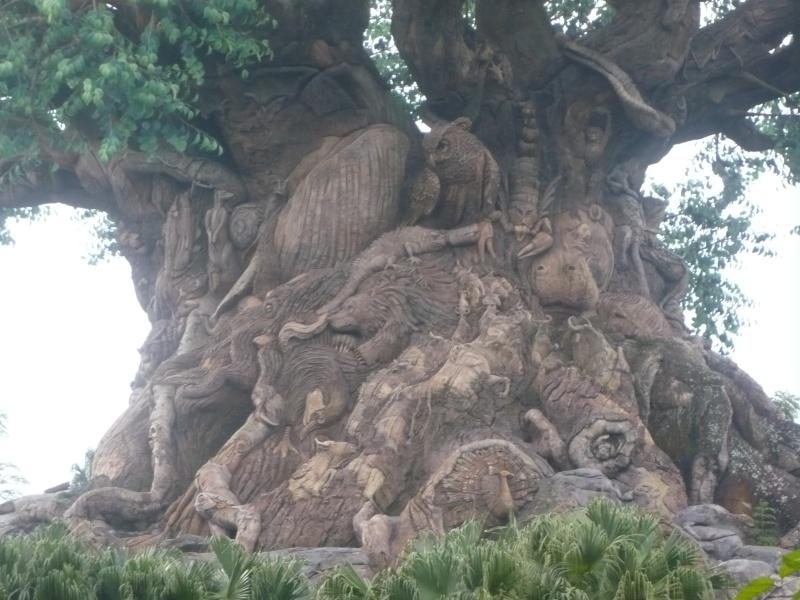 [18-31 octobre 2014] Voyage de noces à Walt Disney World et à Universal - Page 5 P1080955