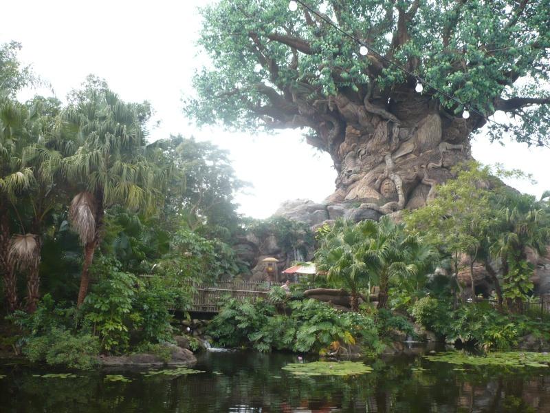 [18-31 octobre 2014] Voyage de noces à Walt Disney World et à Universal - Page 5 P1090019