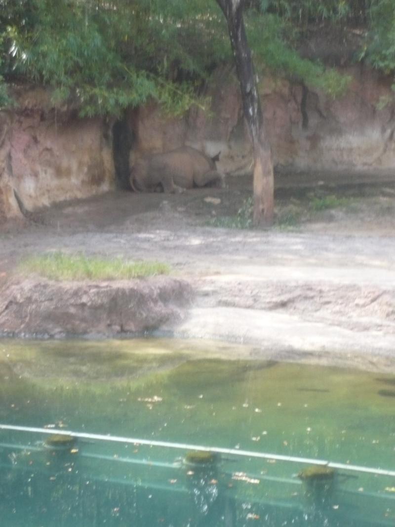 [18-31 octobre 2014] Voyage de noces à Walt Disney World et à Universal - Page 5 P1090024