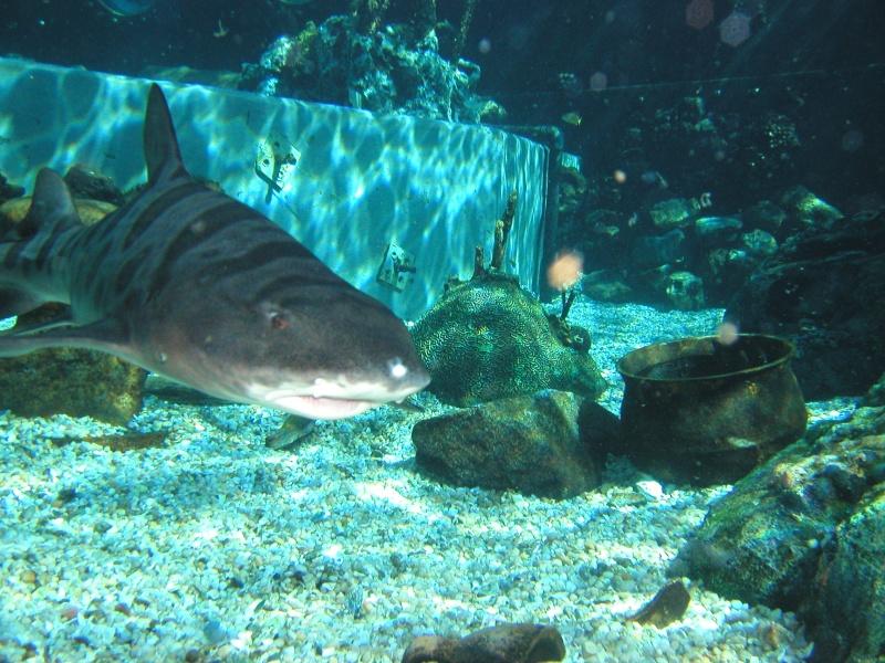 [18-31 octobre 2014] Voyage de noces à Walt Disney World et à Universal - Page 4 Shark-10