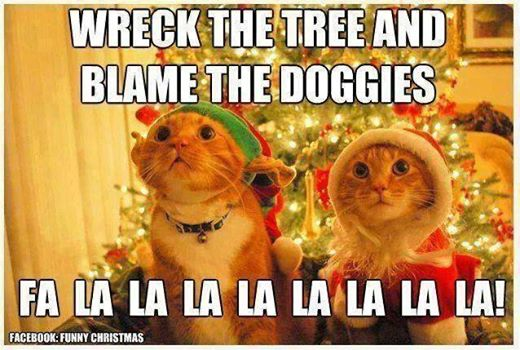 Funny Pictures... - Page 9 Cats10