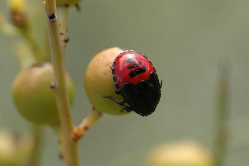 Un peu d'aide SVP pour des insectes 135b10