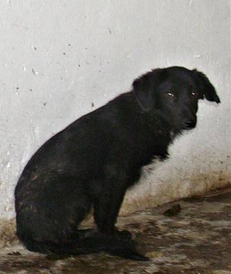 MAFALDO - Mâle croisé, petite taille (PASCANI) - en FA chez Karine (03) 10887910