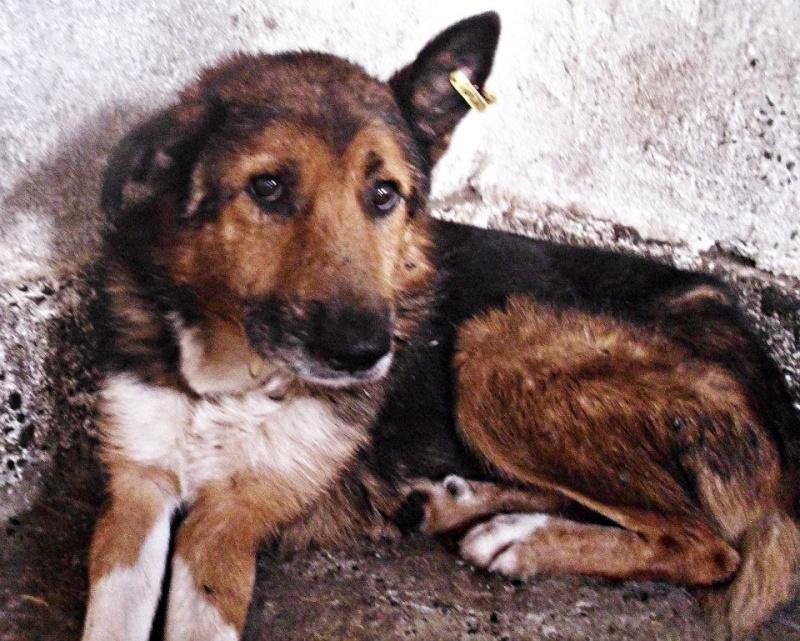 MONSIEUR - mâle,  de taille moyenne, croisé BA, né en 2006 (PASCANI) - En FALD chez Laurence (91) Monsie10