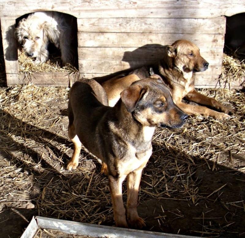 OSCAR - mâle, né environ avril 2012, taille moyenne - En FA chez DarkKing (42) replacé en FA chez Sylvie (02)  Oscar10