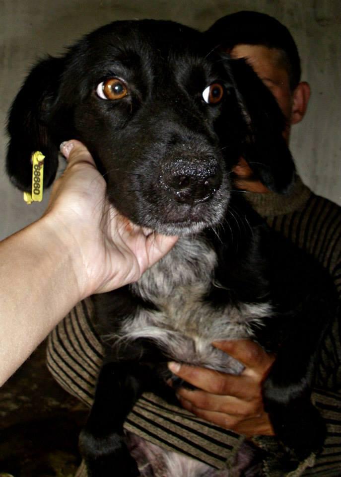 Lily (Ex VERSAILLES), jeune femelle, Août 2013, taille petite à moyenne (Pascani)- adoptée par Margaret (dpt 35) Versai11