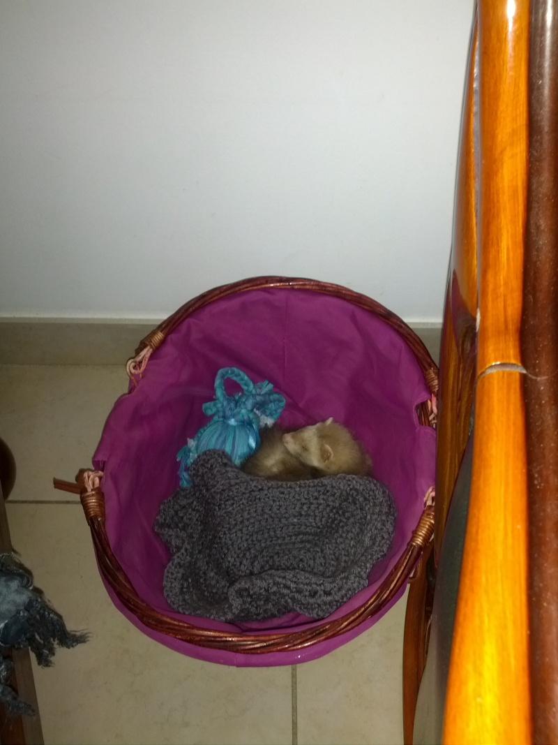 Autre chiens les Chats ??? Fidji est une petite furette  Img_2024