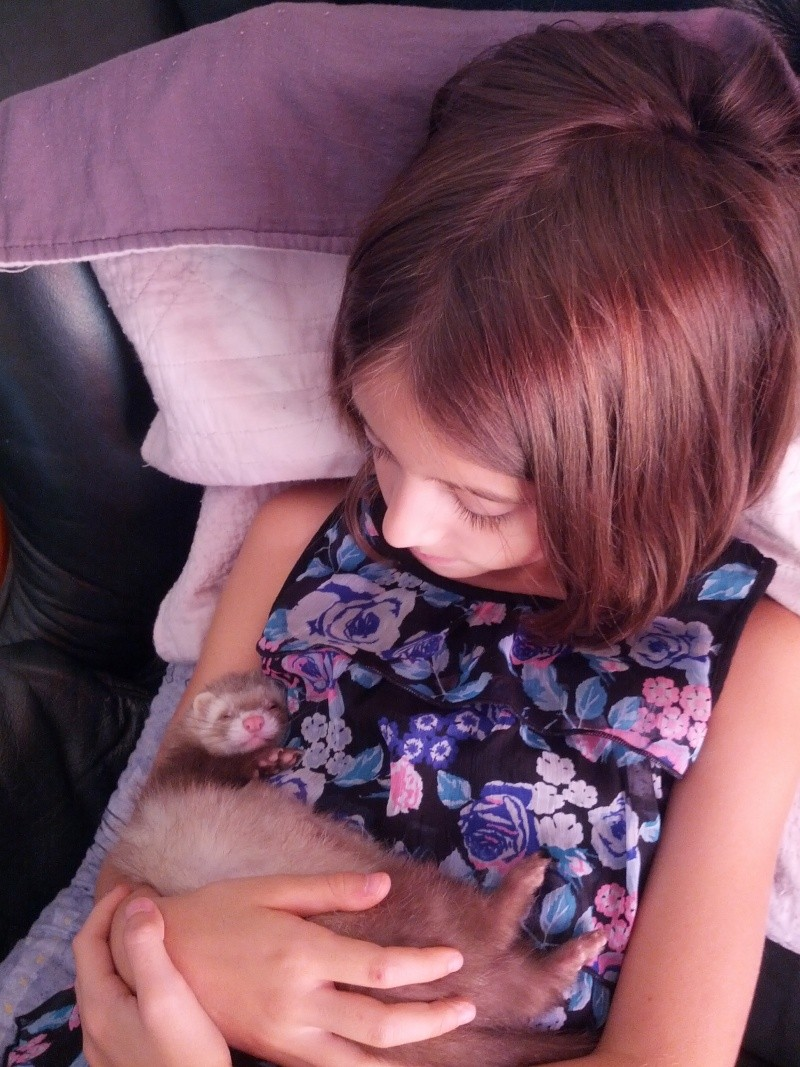 Autre chiens les Chats ??? Fidji est une petite furette  Img_2028