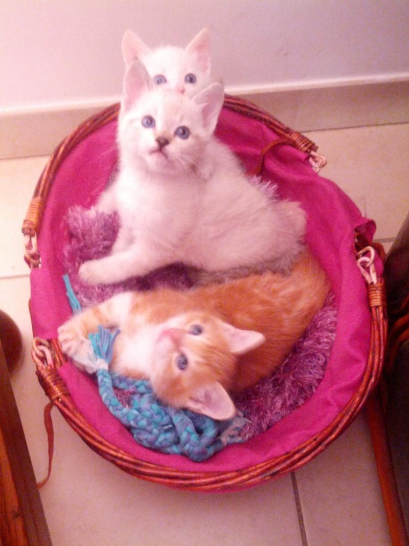 Bisou et ses bébés Img_2047