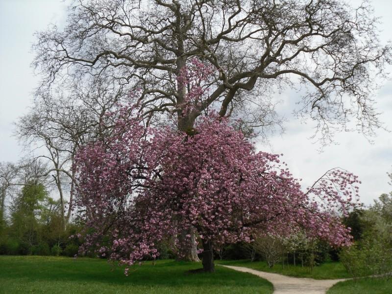 Les jardins du Petit Trianon Madame23