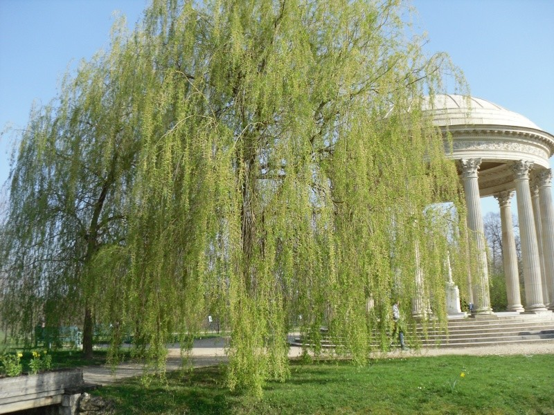 Les jardins du Petit Trianon Versai18
