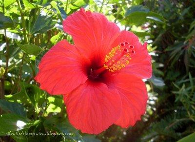 Les défis Botaniques de Shiemi :) Hi110